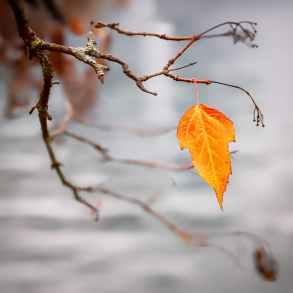 orange leaf on branch